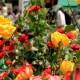 sapori-tra-fiori